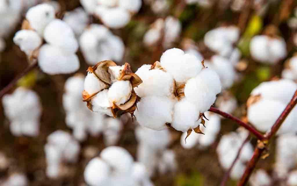 Industria moda, nuovo rapporto su cotone e poliestere a basse emissioni di carbonio